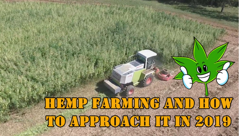 Could Hemp be the Solution to the World's Energy Crisis?