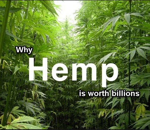 HEMP WORTH BILLIONS