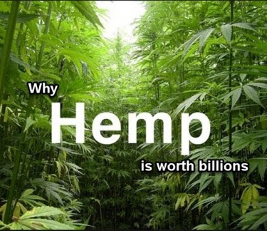 HEMP WORTH BILLIONS
