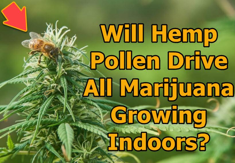 HEMP POLLEN AND BEES