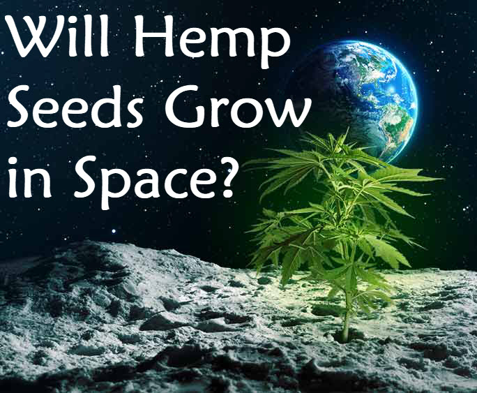 hempseedsinspace - Why You Should Be Eating Hemp Sprouts!