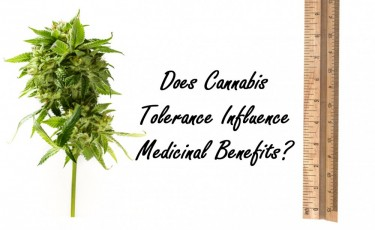 CANNABIS TOLERANCE AND MEDICAL BENEFITS