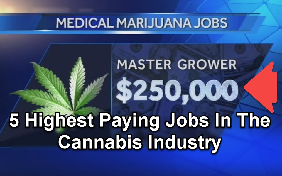HIGH PAYING MARIJUANA JOBS