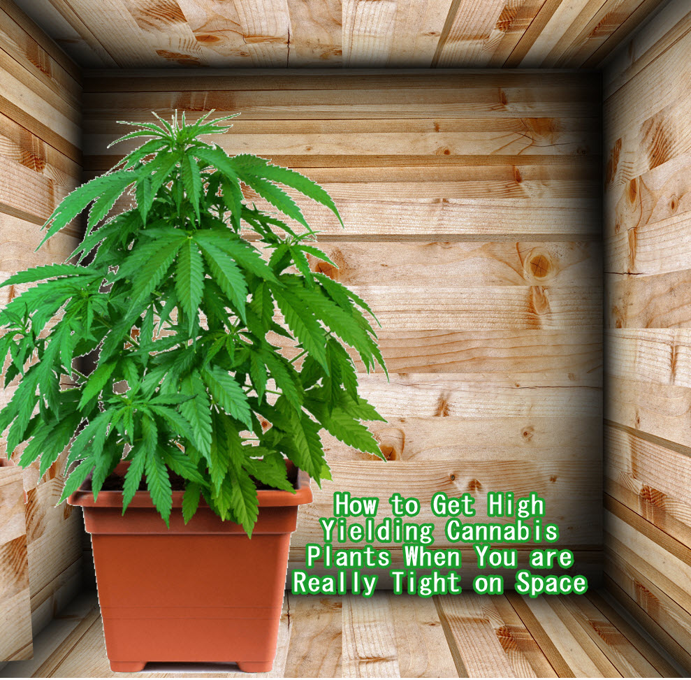 HOW TO GROW WEED IN SMALL PLACES AND CLOSETS