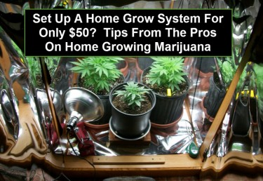 HOW TO GROW MARIJUANA AT HOME ON A BUDGET
