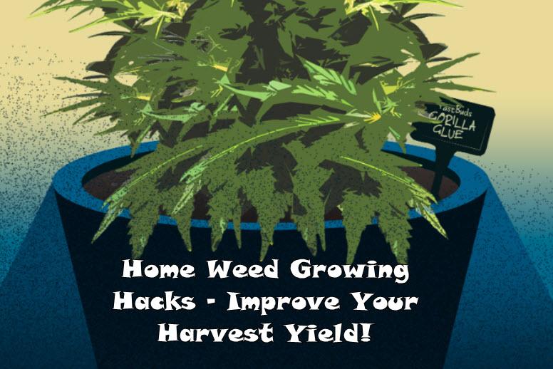 home grow cannabis hacks