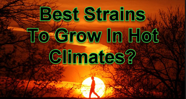 BEST STRAINS FOR HOT CLIMATES