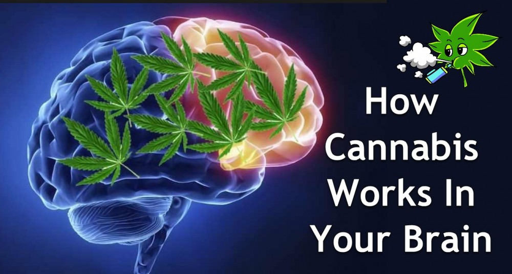 BRAIN HEALTH ON WEED