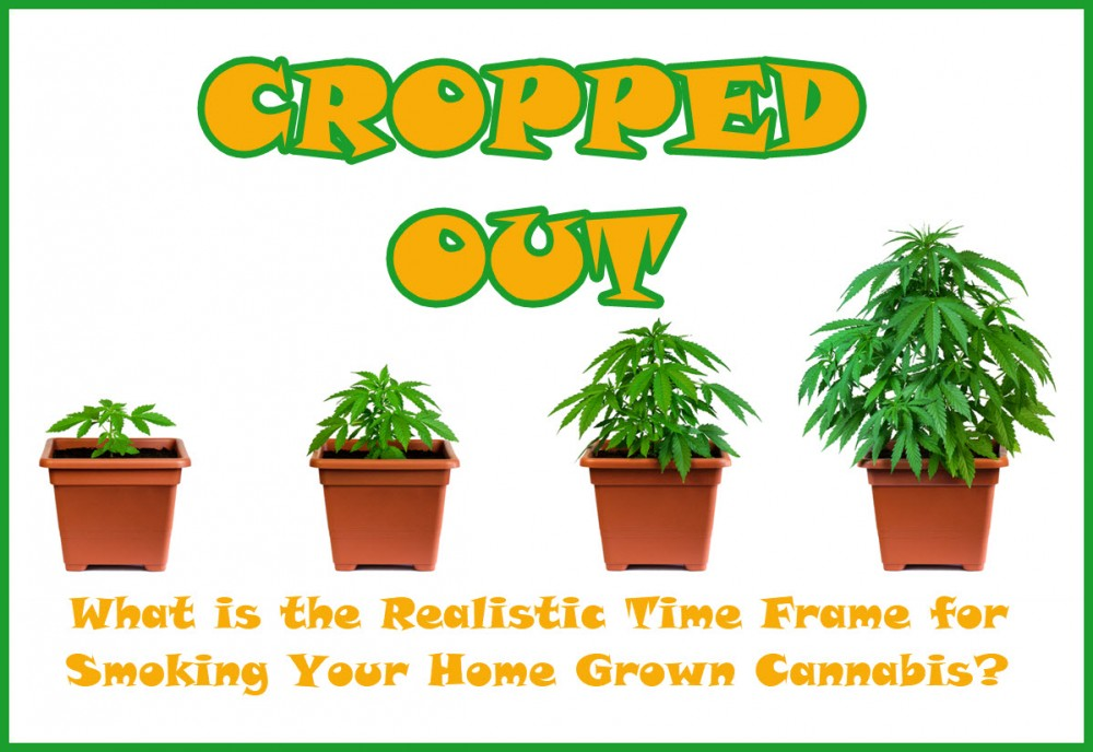 HOW LONG DOES IT TAKE TO GROW WEED IN YOUR HOUSE