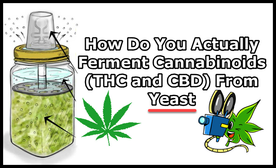 how do you make thc and cbd from yeast