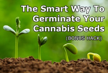 GERMINATE THE CANNABIS SEED TIPS