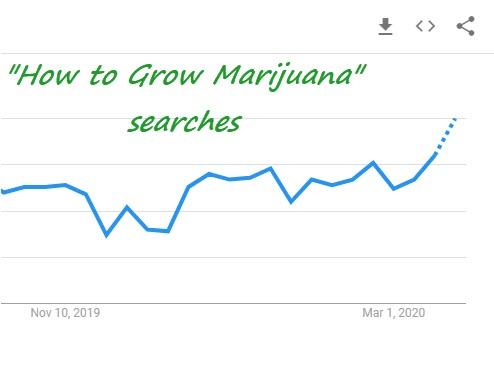 how to grow marijuana searches