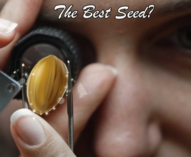 GOOD MARIJUANA SEED SUPPLIER