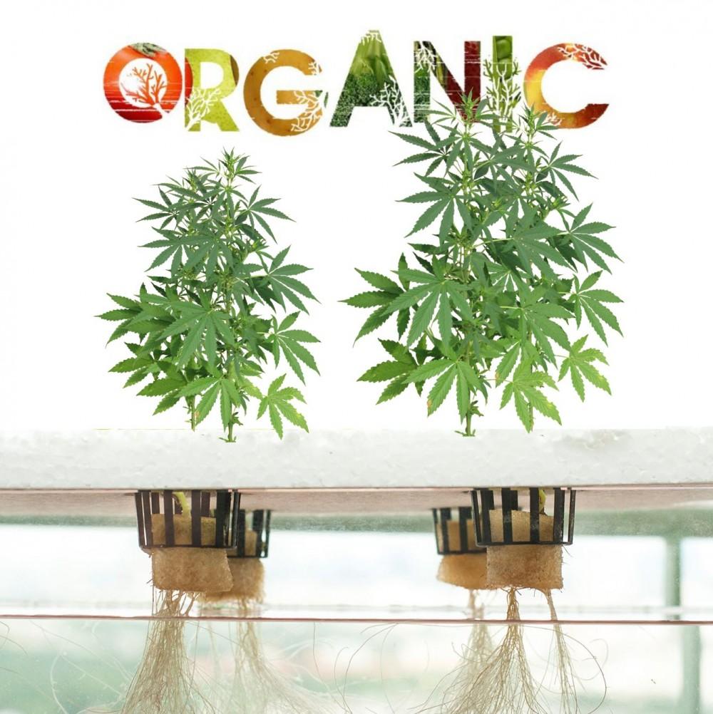 hydroponic organic weed