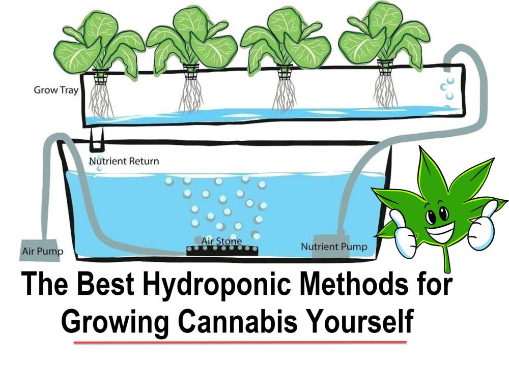 hydroponic cannabis set up