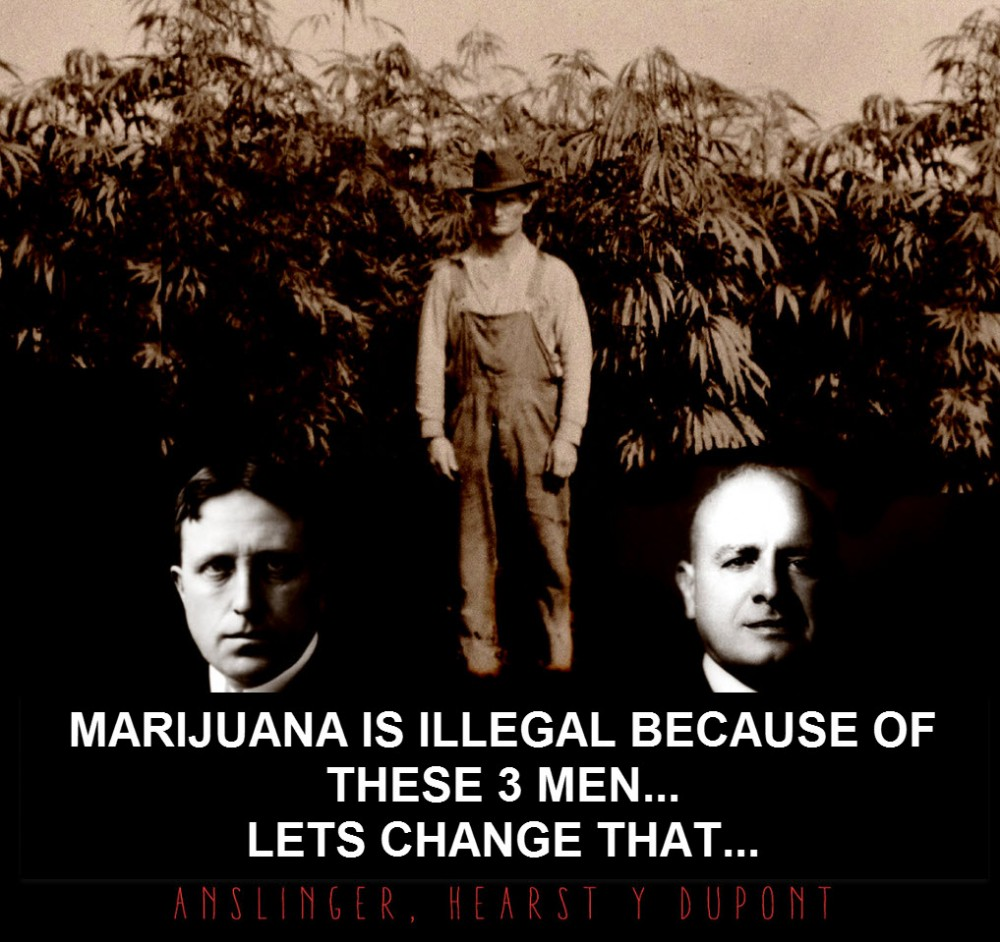 ILLEGAL CANNABIS LAWS