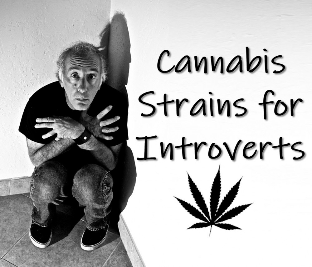 cannabis strains for introverts