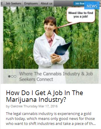 HOW DO YOU YOU GET A JOB IN MARIJUANA