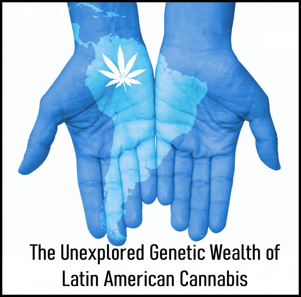 latin american cannabis strains