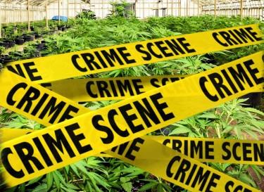 does legal cannabis mean less crime