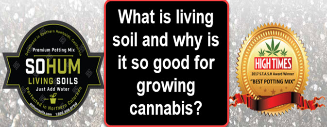 What is the best soil potting mix for growing cannabis for Is soil living