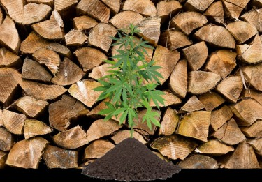 lumber prices and hemp