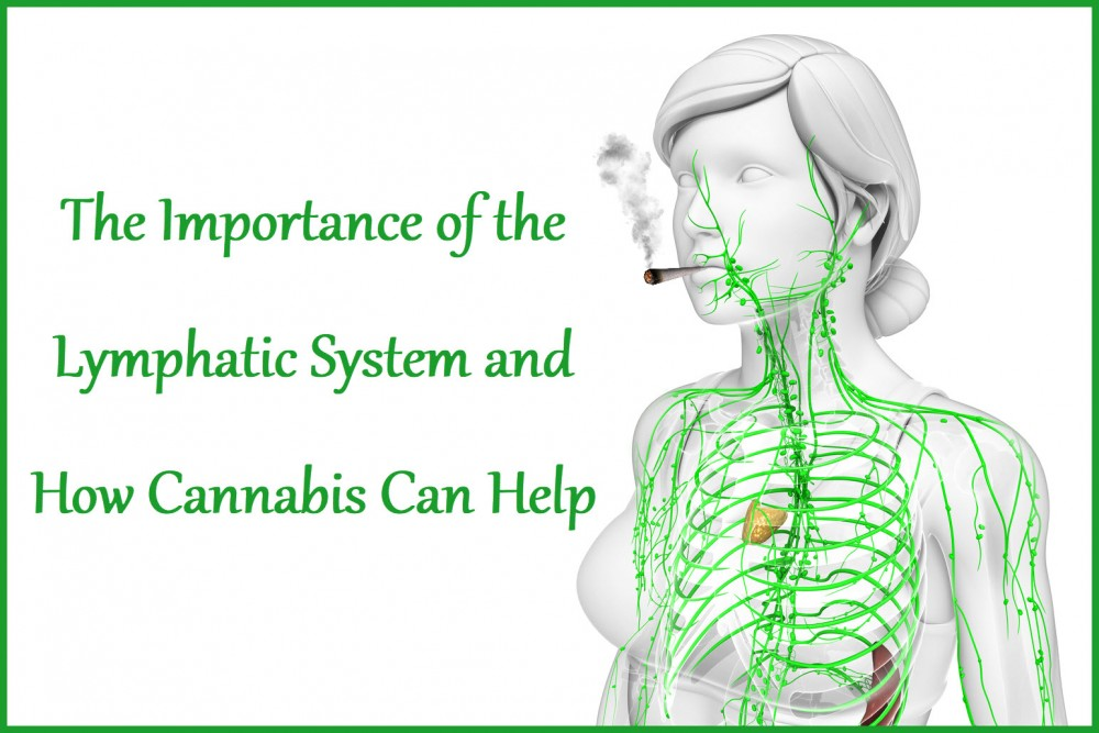 cannabis and lymphatic system