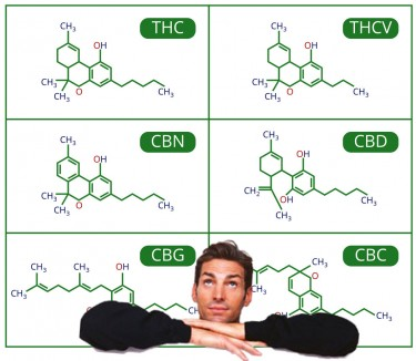 major and minor cannabinoids