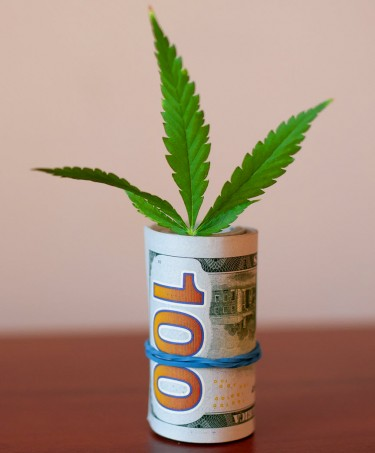 making money in weed without selling any