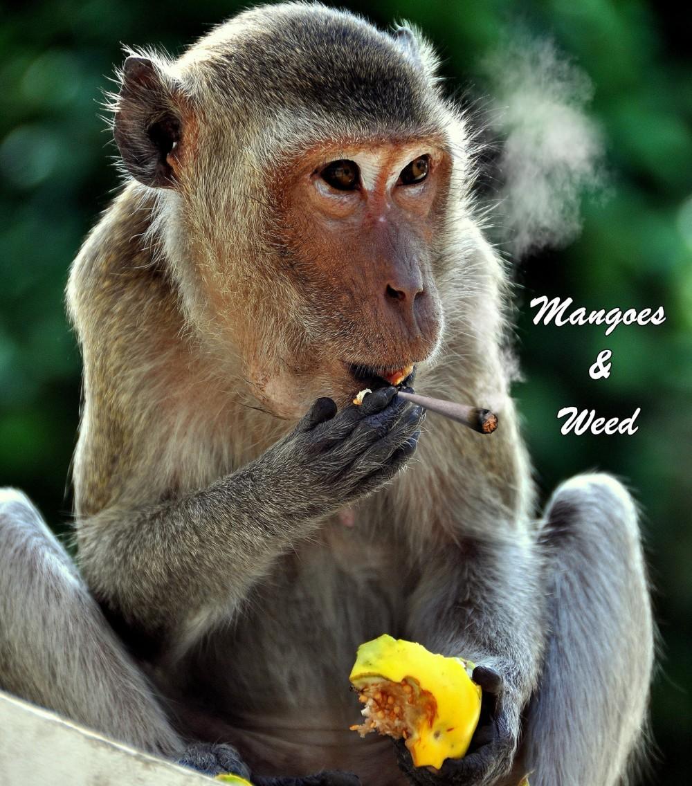mangoesandweed - Why You Should Experiment with Marijuana and Mangoes