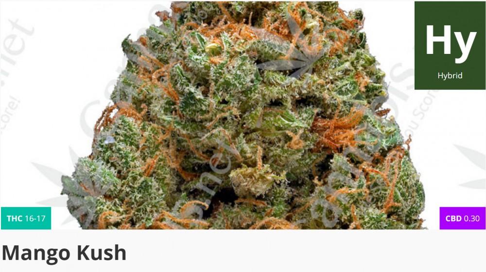 mango kush marijuana