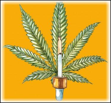 cannabis marijuana aromatherapy
