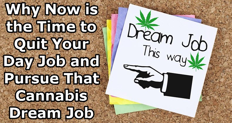 marijuana dream jobs