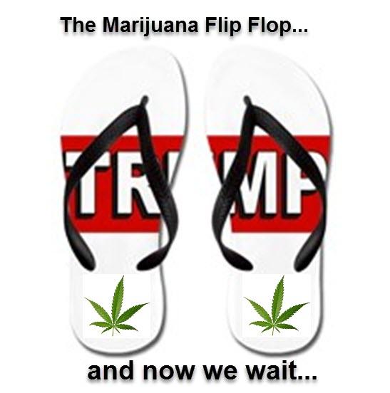 TRUMP FLIP FLOPS ON CANNABIS