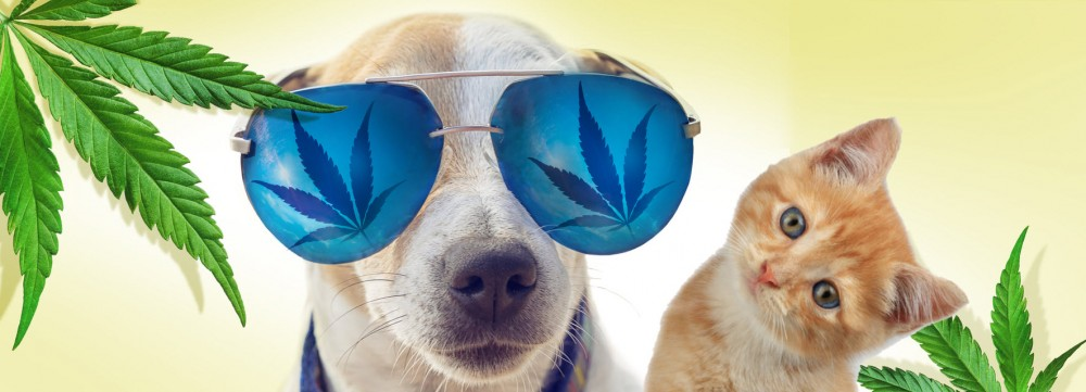 MEDICAL MARIJUANA FOR DOGS AND CATS