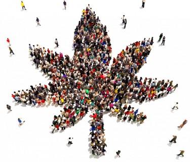 marijuana franchises by people