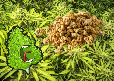 cannabis granola recipe