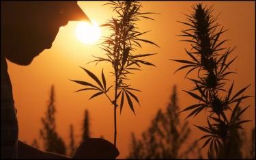 marijuana growing season in north america