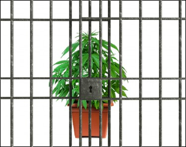pot for prisoners and a big win for cannabis