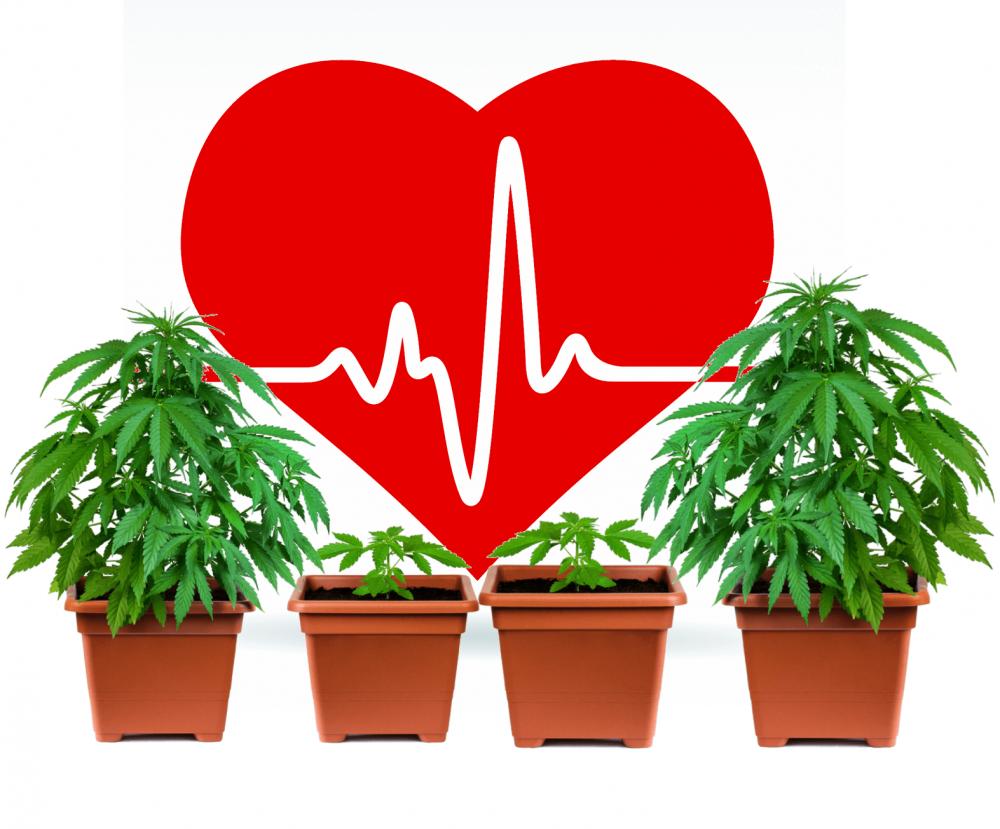 HEART HEALTH AND CANNABIS STUDIES