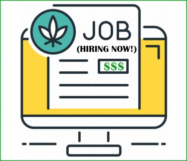 5 most in-demand marijuana jobs openings right now