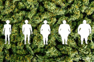 MARIJUANA STRAINS THAT MAKE YOU LOSE WEIGHT