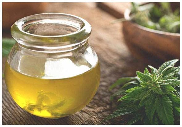 cannabis oil and cbd