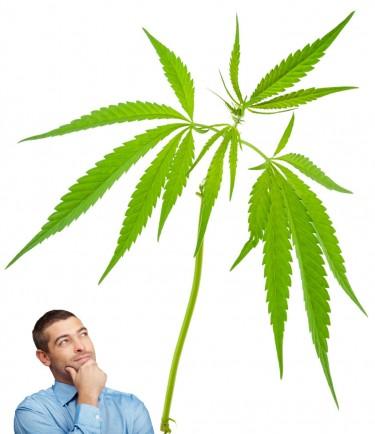 marijuana stem ideas