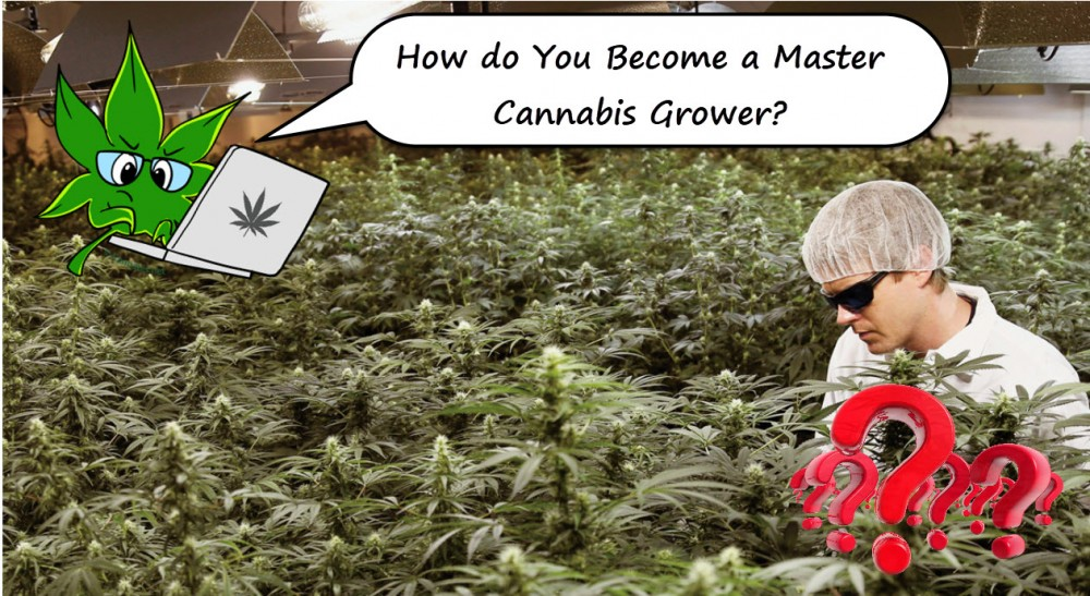 master cannabis grower