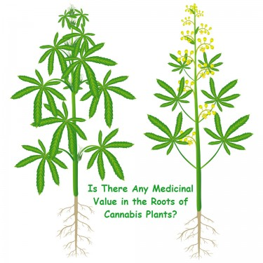 MEDICAL VALUE OF CANNABIS PLANTS