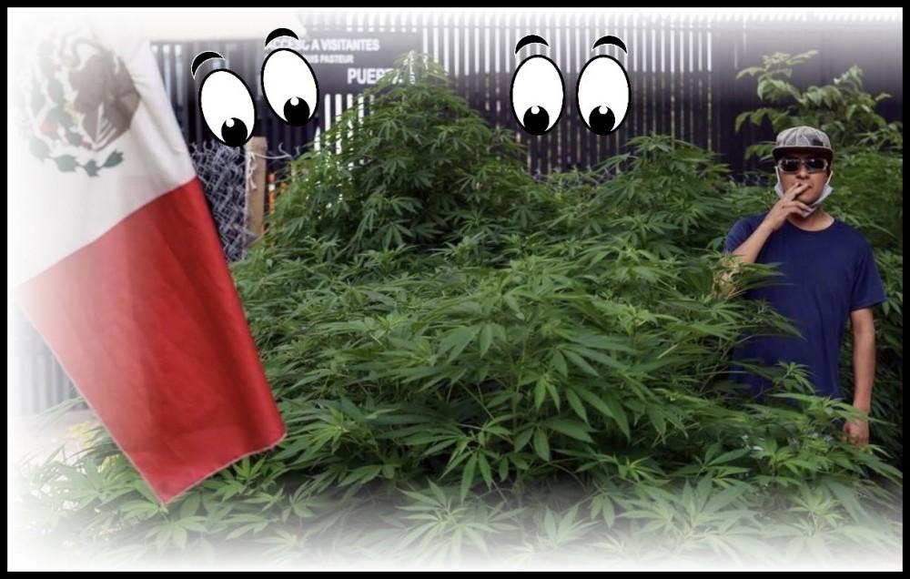 mexican weed garden