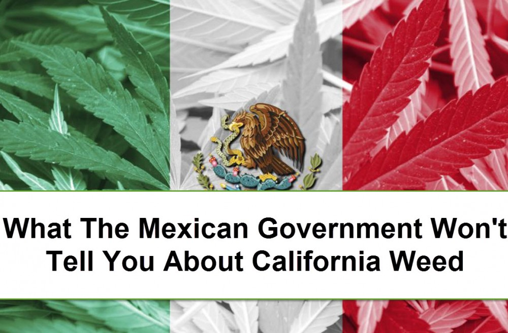 MEXICO MARIJUANA LAWS