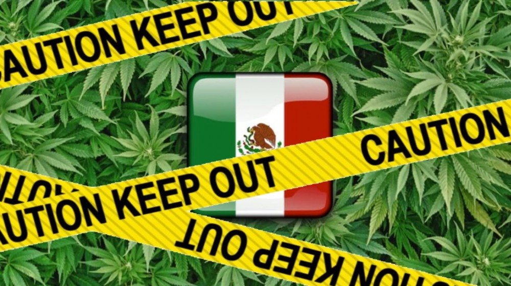 cannabis in mexico legalize