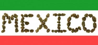 Mexico legalizes marijuana bad news for cartels